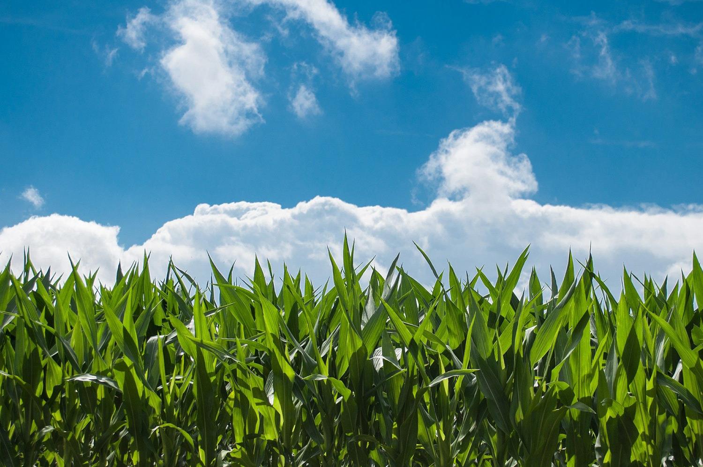 Une réduction des ressources agricoles, y compris en France.