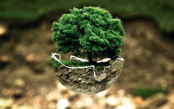 reduire-rechauffement-climatique-plantez-arbres1